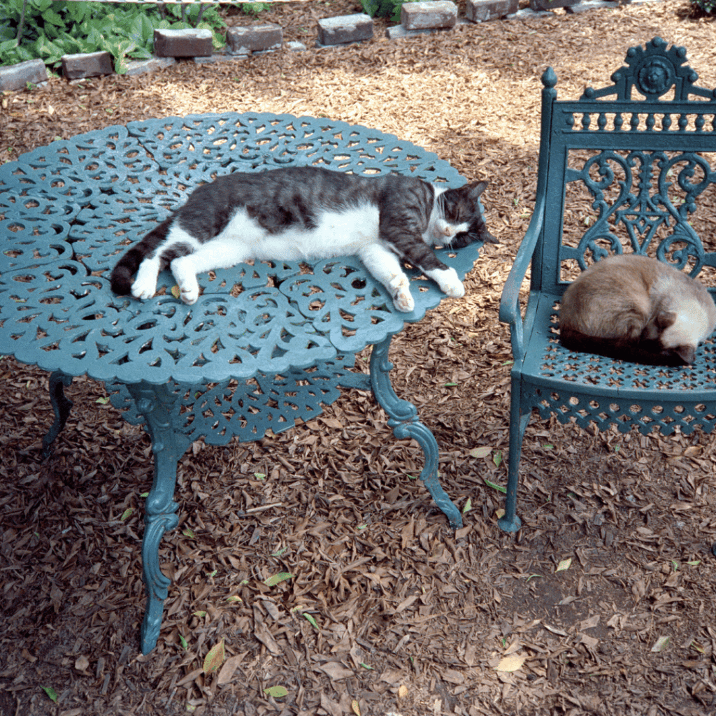 A picture of two hemmingway cats napping on a blue table and chairs outside.