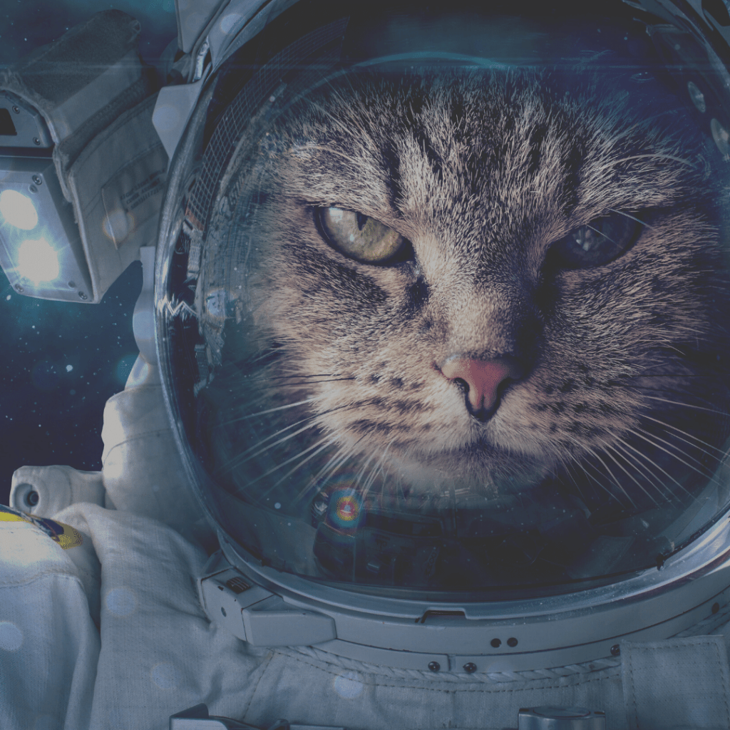 A tabby cat in a spacesuit in space.