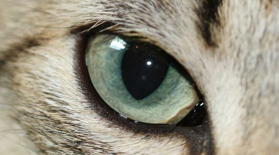 a close up on a green/ yellow cats eye