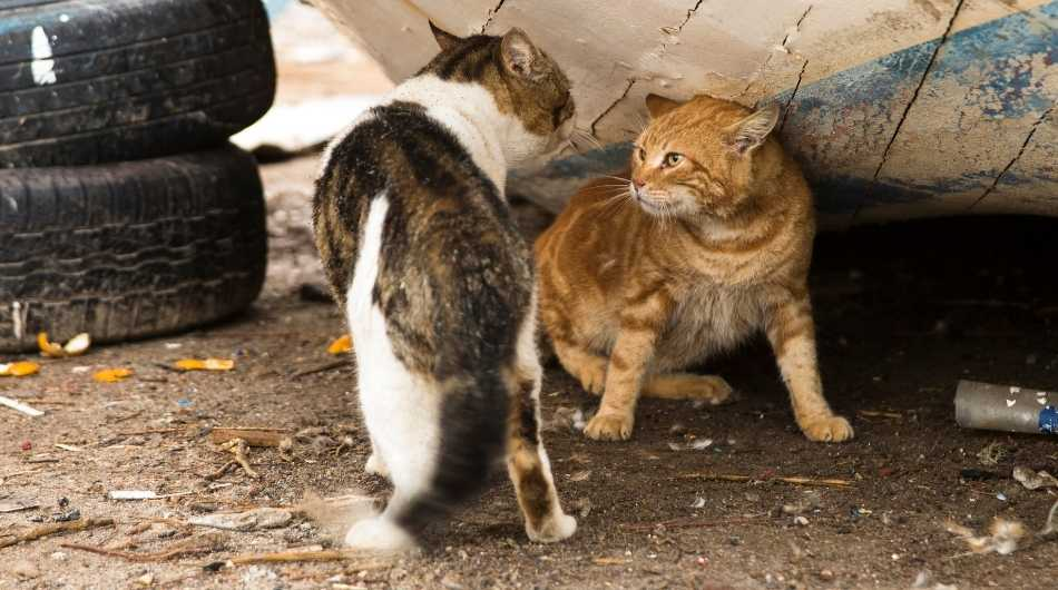 A brown and white cat fighting a ginger cat under a large car tire