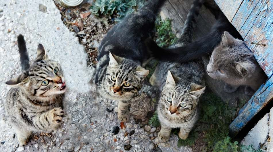 a group of young tabby cats in a group