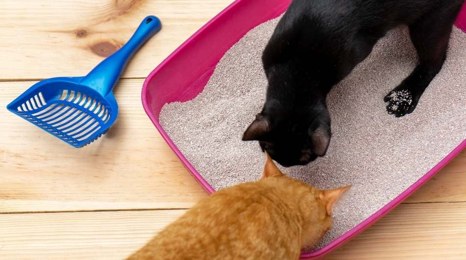 A black and ginger cat smelling a pink litter box
