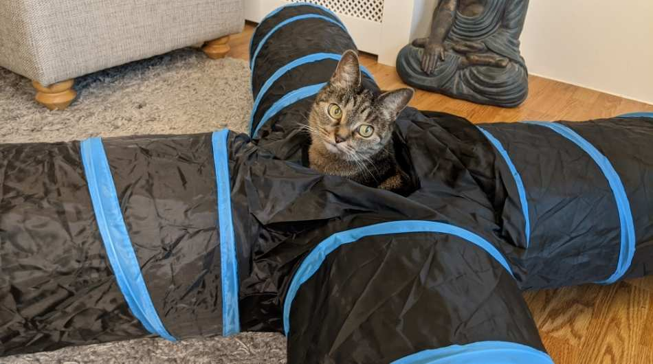 unfolded pawaboo cat tunnel with Owlie the cat in the middle