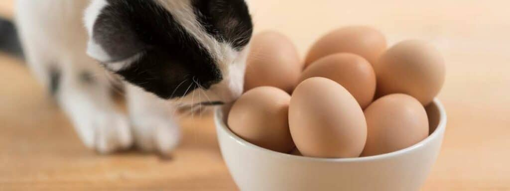 A Black and white cat smelling a bowl of eggs