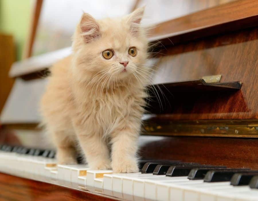 kitten standing on a piano